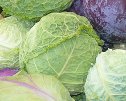 Cabbage (Cancler)