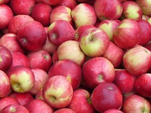 Apples (C.Cancler)