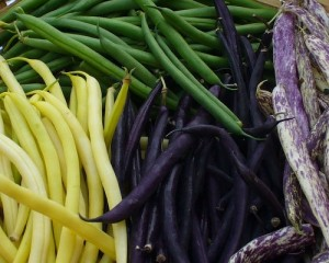 Purple, wax (yellow), and green beans (Cancler)