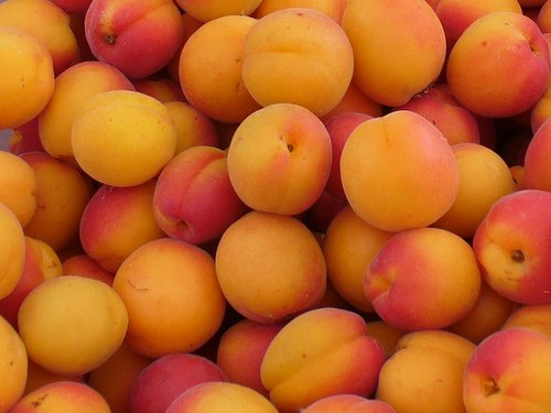 unusual ways to preserve fresh apricots - The Home Preserving Bible