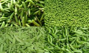 Green peas, shelled peas, sugar snap, snow peas (C.Cancler)
