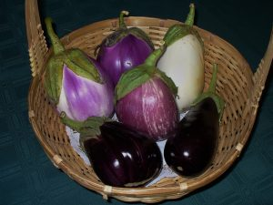 Eggplants photo copyright by Carole Cancler