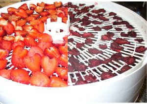 Dried strawberries photo by Carole Cancler