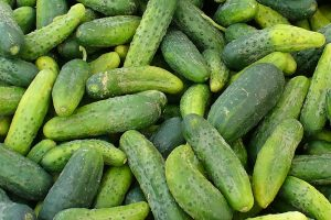 Pickling cucumbers Photo by Carole Cancler