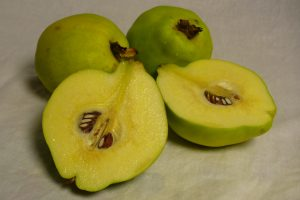 fresh-quince-photo-copyright-by-carole-cancler