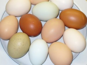 Fresh eggs photo copyright by Carole Cancler